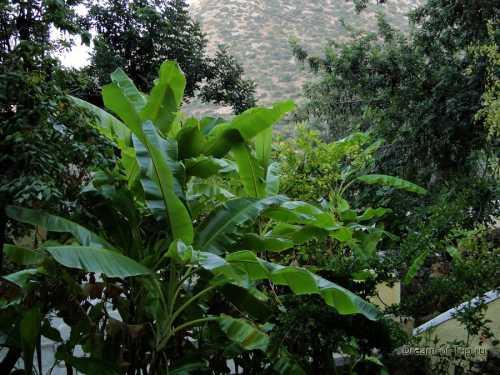 нежелательная растительность на теле: натуральные средства